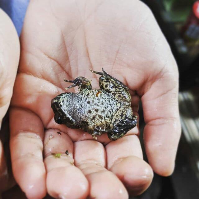 我が家の #ひっくりカエル その2#petstagram #pet #flog #ビオトープ #biotope